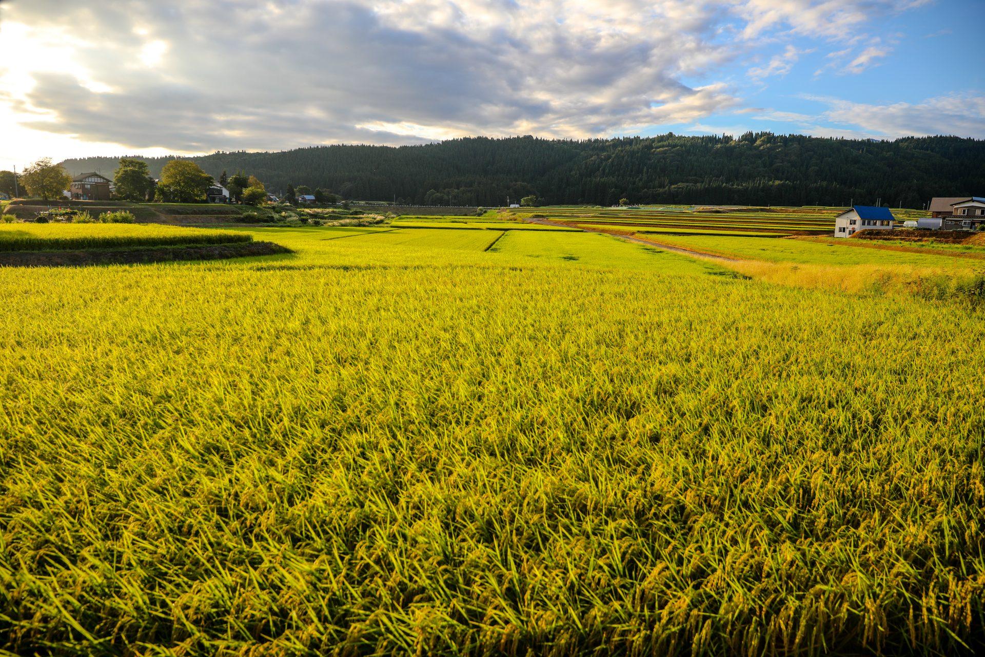 恵まれた気候と名水、そして日本一の信濃川が流れる米作りに最適な砂上腐植土。これらが産んだ「満作米」